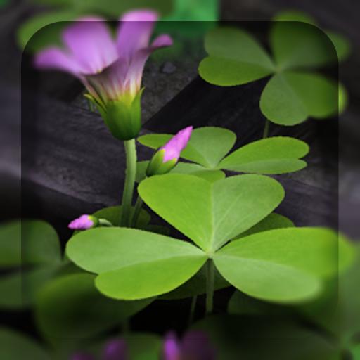 3D Flowers Live Wallpaper HD Download Latest Version APK