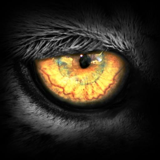 Leopard.tv Wildlife Magazine Download Latest Version APK