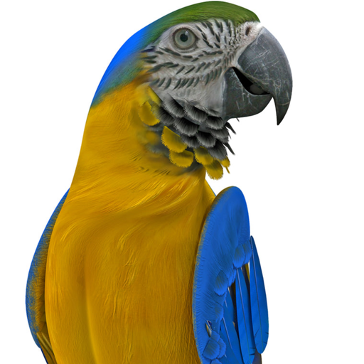 Real Talking Parrot Download Latest Version APK