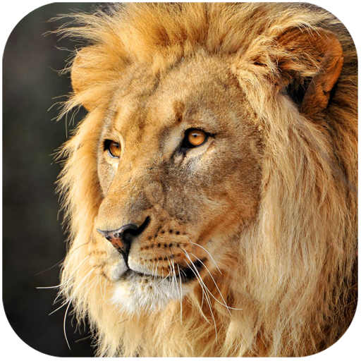 Talking Lion Download Latest Version APK