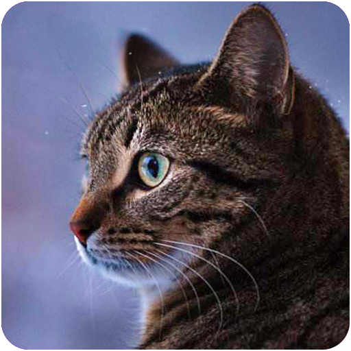 Talking Reality Cat Download Latest Version APK
