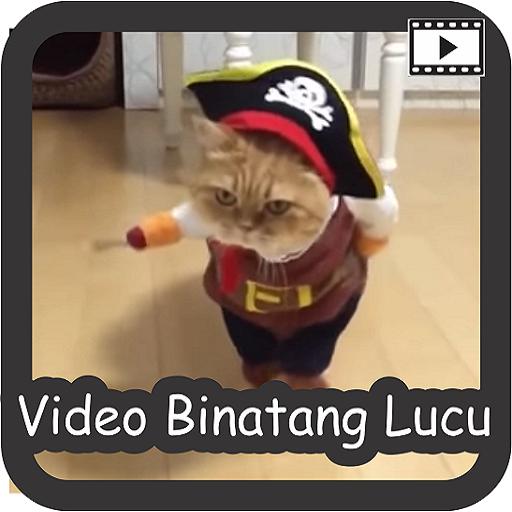 Video Binatang Lucu Download Latest Version APK