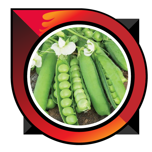 How to Grow Green Beans Good Download Latest Version APK