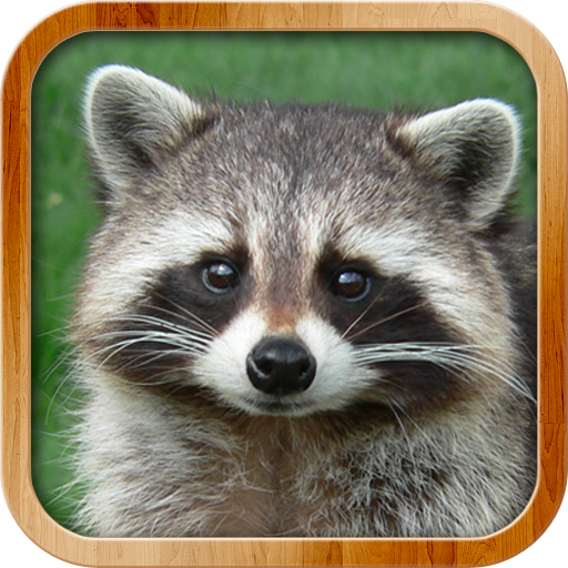 Kids Learn About Animals Download Latest Version APK